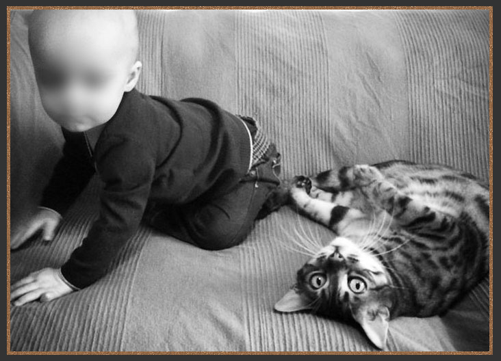 My son Buddy with my pet Bengal Smudge